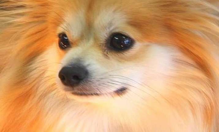 american dog eats diamonds at jewellery store