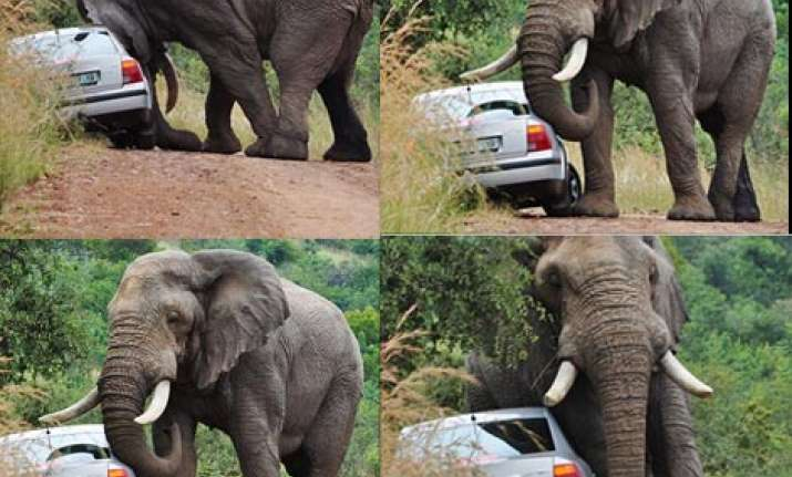 angry elephant throws car into a ditch