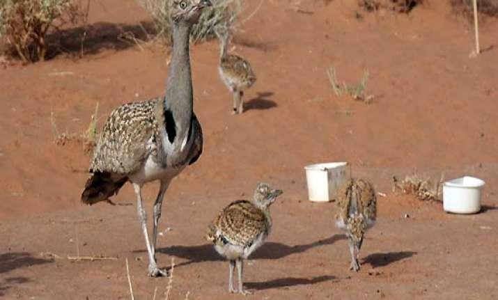 bird hunting creates friction between india pakistan