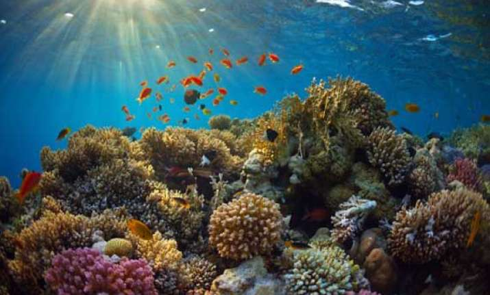 caribbean coral reefs may disappear within 20 years report