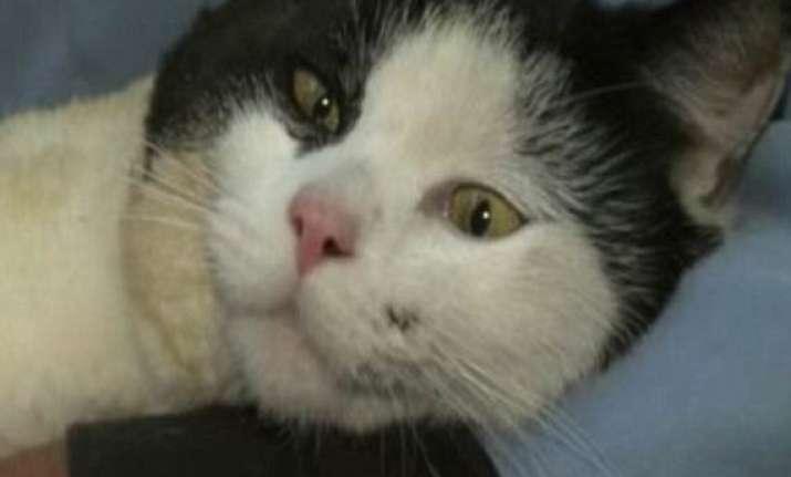 cat in usa survives 4 hour 322 km ride sitting under truck