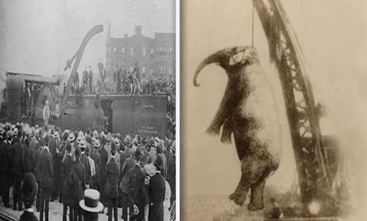 chilling photo of an elephant in us being hanged to death