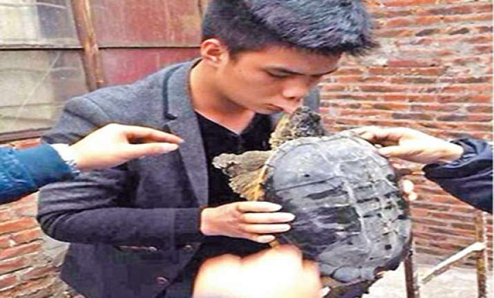 chinese man kisses turtle goodbye lands in hospital