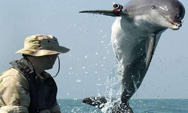 crimea s war dolphins now in hands of russian navy