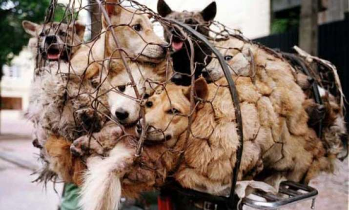 dog meat festival celebrated in china despite protests