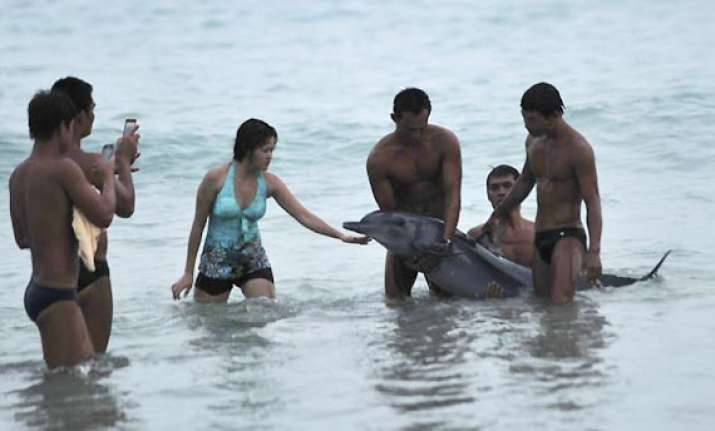 dolphin dies in china after tourists manhandle