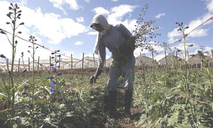ecuador flower growers in snowden shock