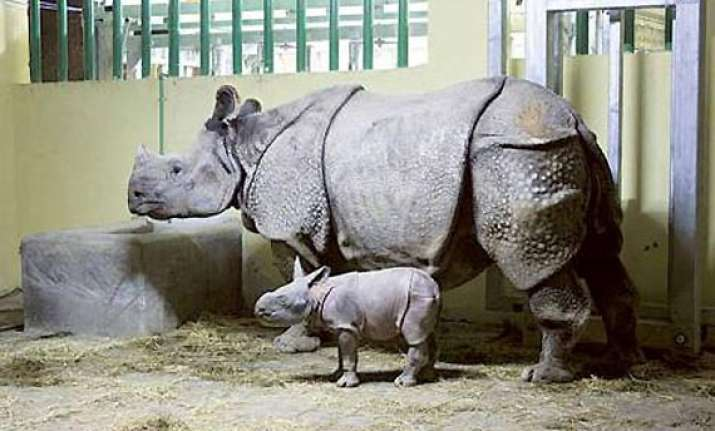 first indian rhino born in sharjah zoo