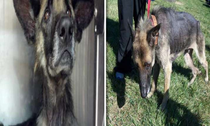 horrible dog chained to a tree for 4 years