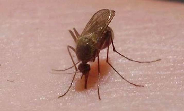 japanese scientists make genetically modified mosquitos to