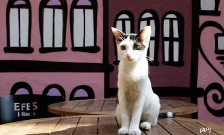 cat culture thrives in istanbul