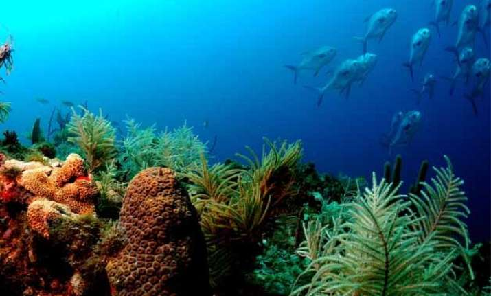 marine wild life about to collapse in 100 years study