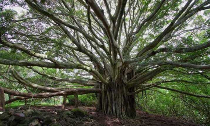 know about 10 trees associated with mythology