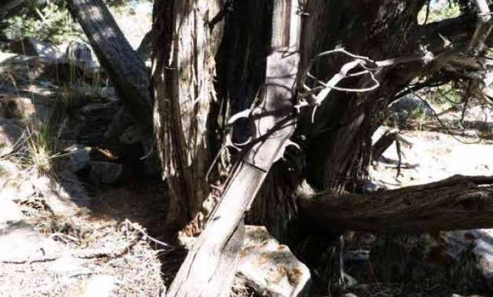 gun from 1800s found leaning against tree in us