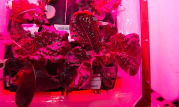 space salad astronauts grow vegetables in space