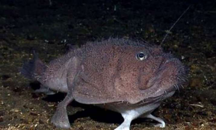 four legged fish found walking on ocean floor near indonesia