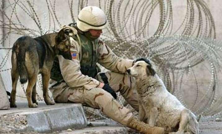 sick iraqi terror plot to blast us plane with exploding dogs