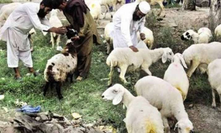 hundreds of thousands of animals slaughtered on eid in
