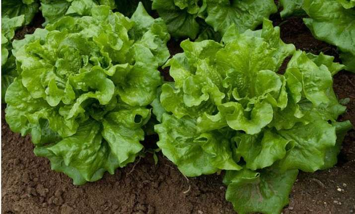 scientists plan to grow lettuce on mars