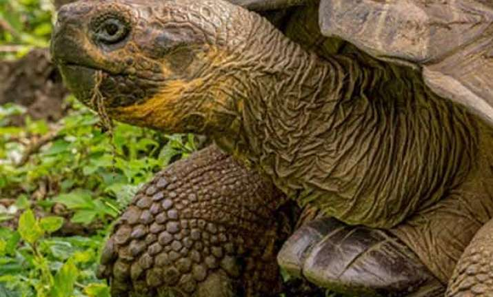 scientists cheered by birth of galapagos tortoises in wild