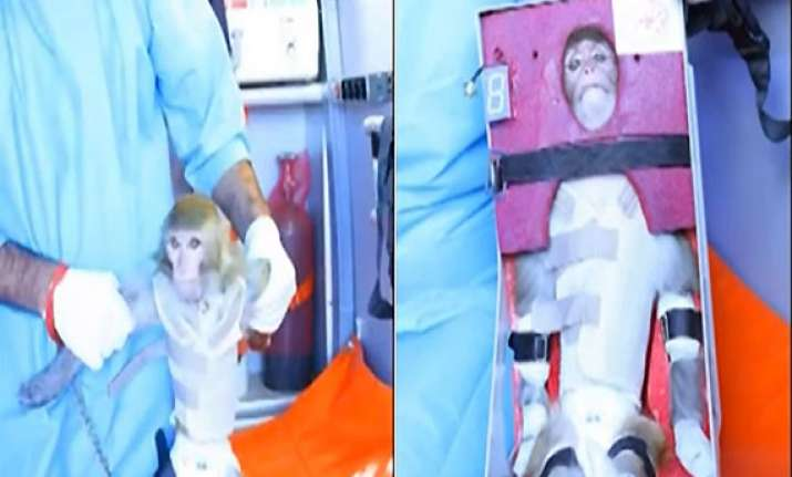 iran to send another monkey into space