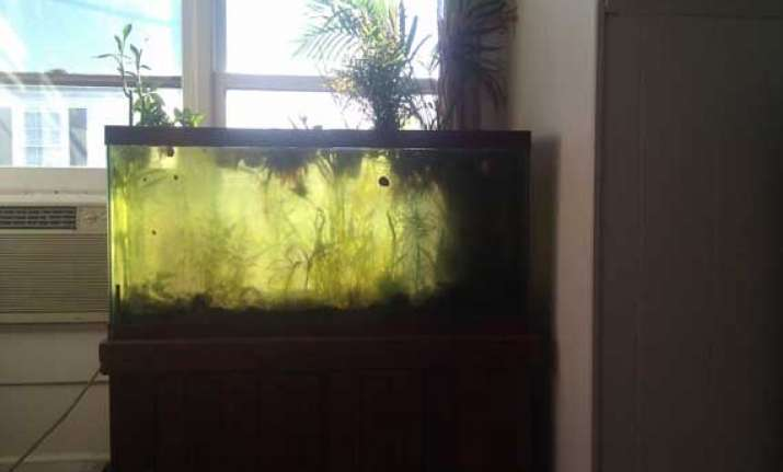 now a self maintaining fish tank