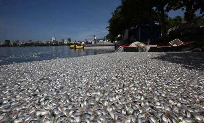 thousands of dead fish wash up on brazilian lagoon