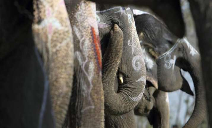 two killed in elephant attack in nepal