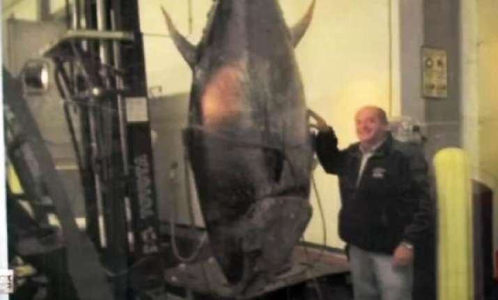 us man catches 400 kg tuna feds seize