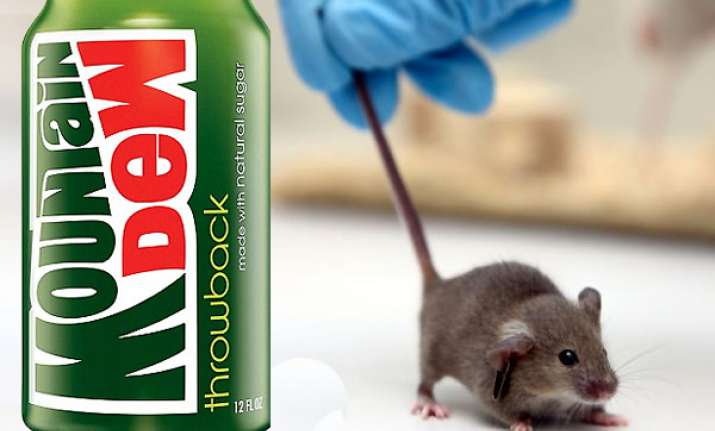 us man sues pepsi after finding tiny mouse inside mountain