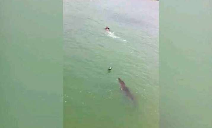 what happened after crocodile chased a swimmer in mexico