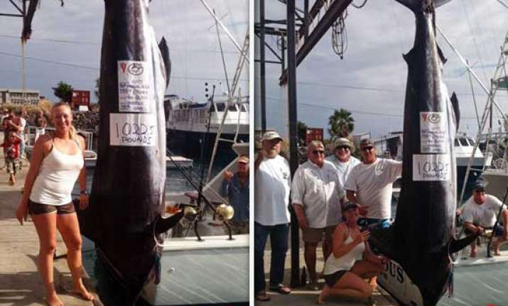 woman catches marlin weighing 428 kg in hawaii competition
