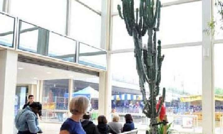 16 foot cactus severely injures us city worker