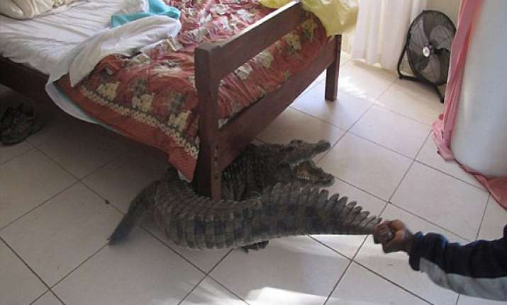 40 year old man finds 8 feet crocodile hiding under his bed