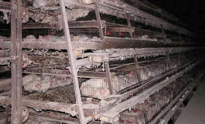 agnivesh demands ban on confining hens inside battery cages
