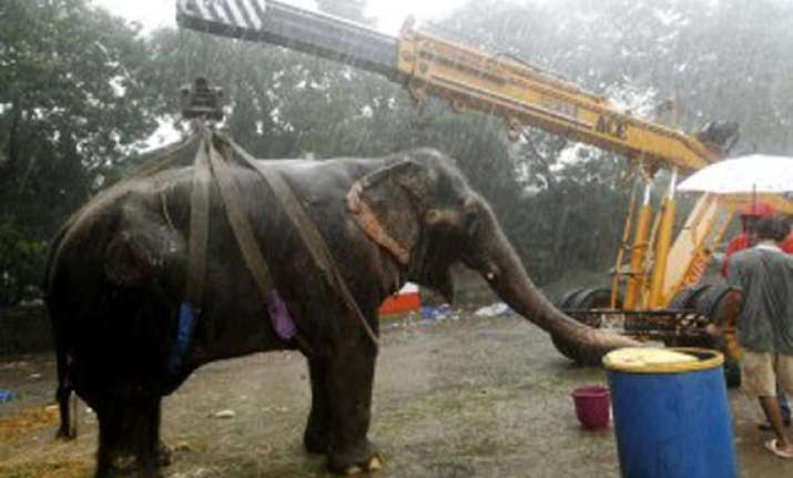ailing elephant bijlee is dead