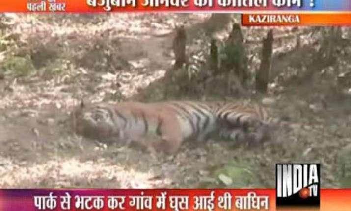 assam policemen fire from ak 47 kill tigress near kaziranga