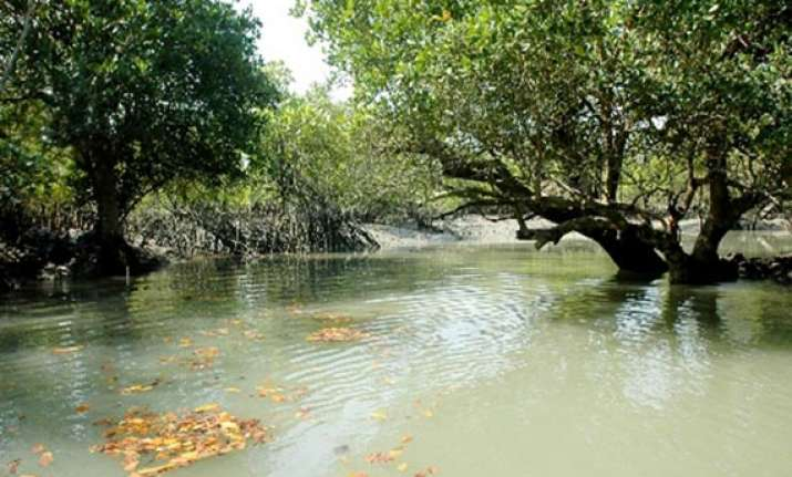 bengal comes up with new plans for sunderbans