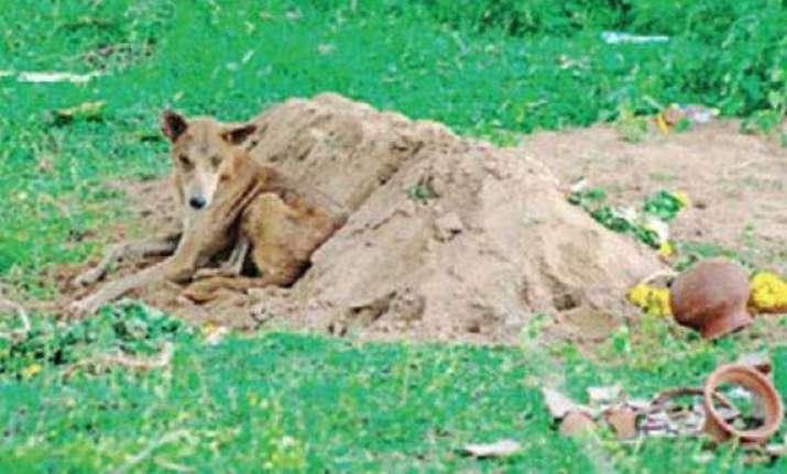 chennai dog waits for master s return at grave