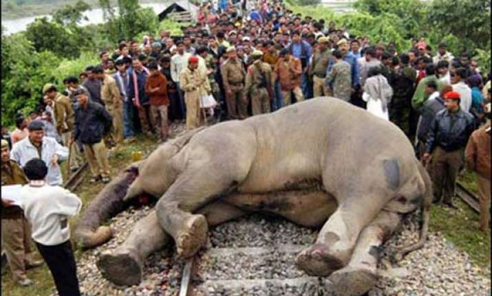 coromandel exp mows down 5 elephants to death in odisha