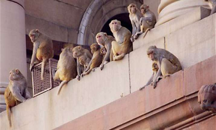 delhi government spent rs. 6 crore to feed monkeys in