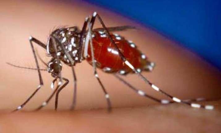 dengue fever returns to delhi one dead
