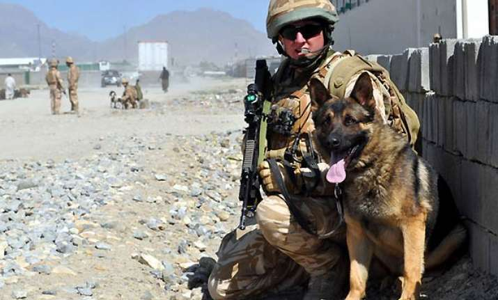 dog breed that sniffed out osama to help indian forces