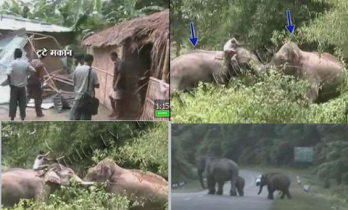 drunk elephant damages houses near kaziranga