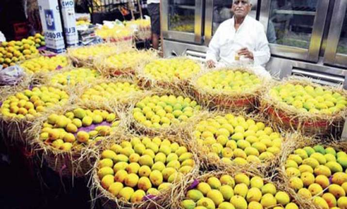 eu ban on indian mango hits maharashtra farmers hard
