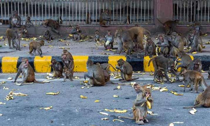 efforts on to check dog monkey menace in parliament