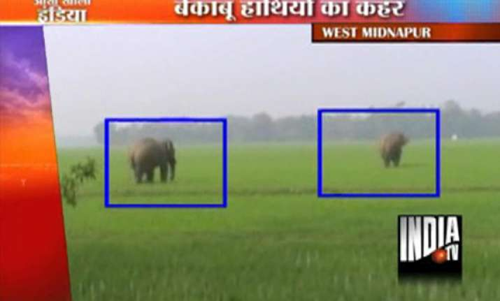 elephants run amok in bengal two dead
