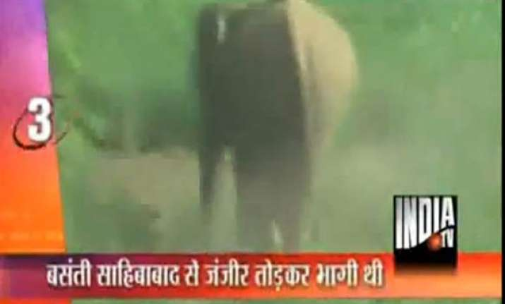 female elephant on the rampage in ghaziabad