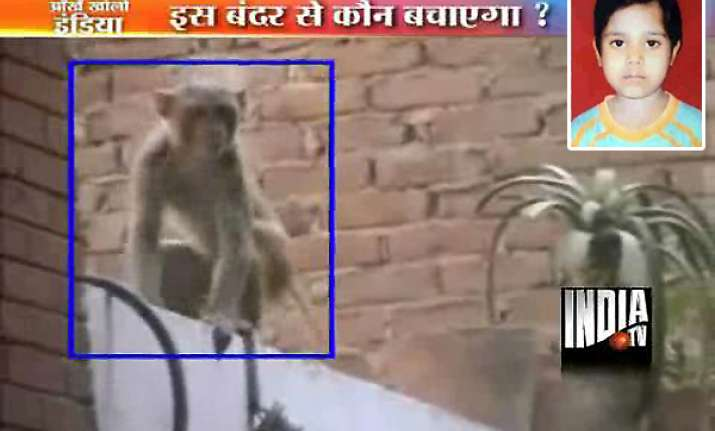girl dies of monkey bites in south delhi