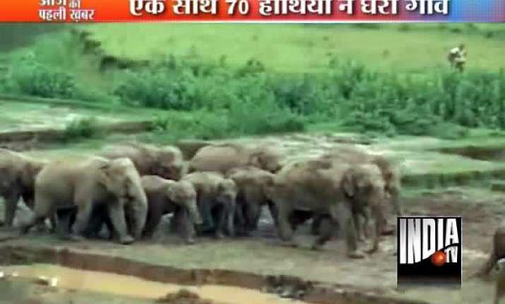 herd of wild elephants go on rampage in assam village kill